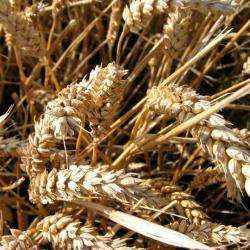 Alimentation bio ANDRE ARCHIMBAUD - 1 -