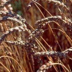 Alimentation bio ANDRIEU GUY - 1 -