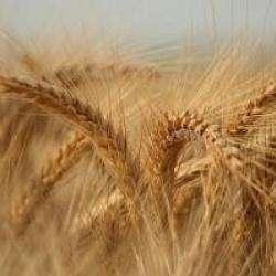 Alimentation bio ANNE EICHE - 1 -