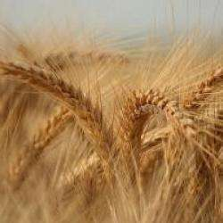 Alimentation bio Antoine HERBER - 1 -