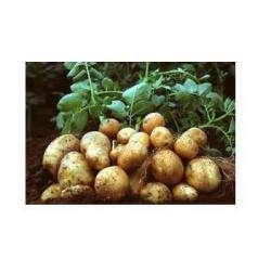 Alimentation bio ARAGUES PABLO - 1 -