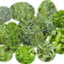 Parfumerie et produit de beauté AROMATIK SAVEURS VEGETALES - 1 -