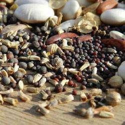 Alimentation bio Association du moulin de la Ribère - 1 -