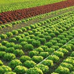 Alimentation bio ASSOCIATION LA PORTE OUVERTE - 1 -