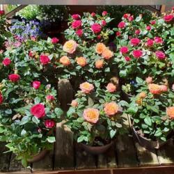 Jardinerie AU JARDIN FLEURI - 1 -