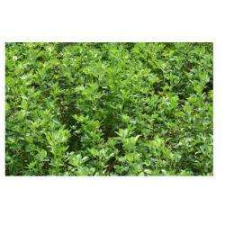 Alimentation bio AUCLAIR LIONEL - 1 -