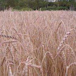 Alimentation bio AUDEBERT FRANCIS - 1 -