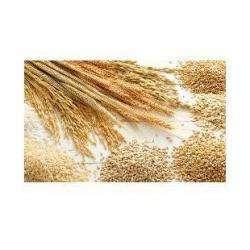 Alimentation bio AXIANE MEUNERIE - 1 -