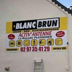 Blanc Brun Pluvigner