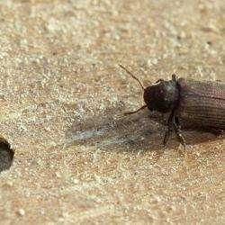 Entreprises tous travaux Bordeaux Termites - 1 -