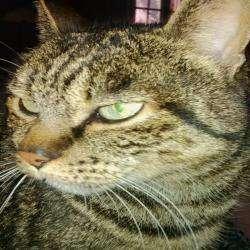 Vétérinaire CHARVIER PIERRE-JACK - 1 - Regard De Chat -