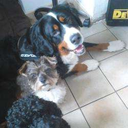 Doggy Dogs Gaillon