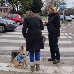 Dressage Ecole des chiens guide - 1 -