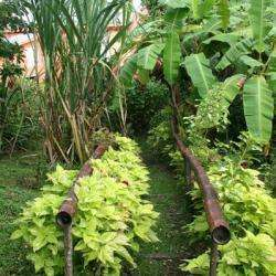 Ecotours Jardin Créole Le Marin