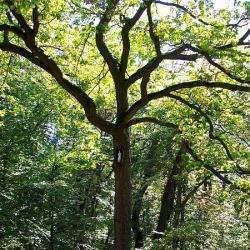 Forêt D'halatte