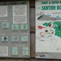 Forêt De Notre Dame De La Paix
