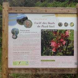 Forêt Des Hauts De Mont-vert Le Tampon