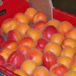 Fruits Primeurs Bonnefoy