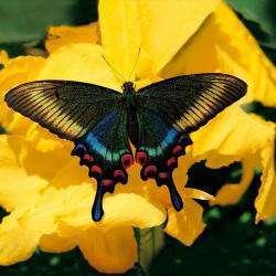 Jardin Des Papillons Hunawihr