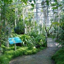 Jardin Du Conservatoire Botanique Brest