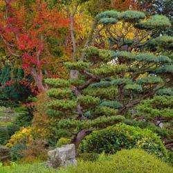 Jardin Zen D'erik Borja Beaumont Monteux