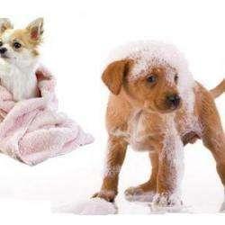 Salon de toilettage Kouaf Dog Toilettage Prix Mini - 1 -