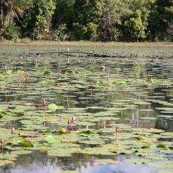 Lac Naturel De Karihani Tsingoni