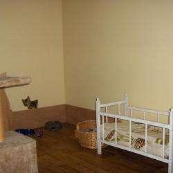 Garde d'animaux et Refuge Le Royaume des Chats - pension chat - 1 -