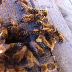 Alimentation bio Les abeilles de Rouis - 1 -