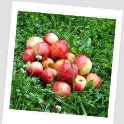 Primeur Les Coteaux du Linon - 1 - Pommes -