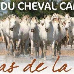 Producteur MAISON DU CHEVAL CAMARGUE - 1 -