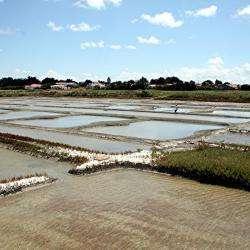 Marais Salants De La Bonne Pogne  La Guérinière