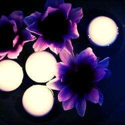 My Beauty Wish