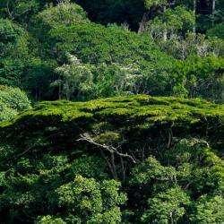 Nature De Guyane Saint Laurent Du Maroni