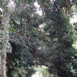 Activité pour enfant Office national des forêts - 1 -
