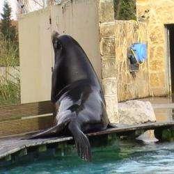 Parc animalier Parc Zoologique De La Petite Hotoie - 1 -