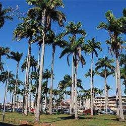 Place Des Palmistes Cayenne