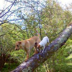 Pôle Canin & Félin Limoges