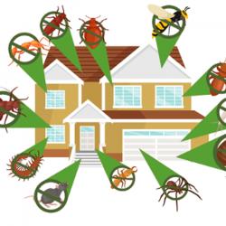 Ahsc Pôle Insectes - Redon Redon