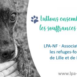 Ligue Protectrice Des Animaux Du Nord De La France - Refuge De Lille Lpa-nf Lille