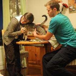 Urgences Vétérinaires Toulouse Toulouse