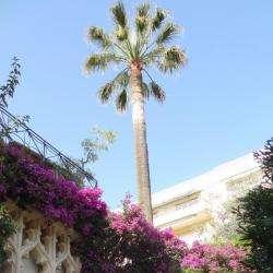 Chambre D'hôtes Villa Victoria Cannes