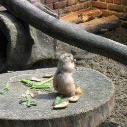 Zoo De Lille Lille