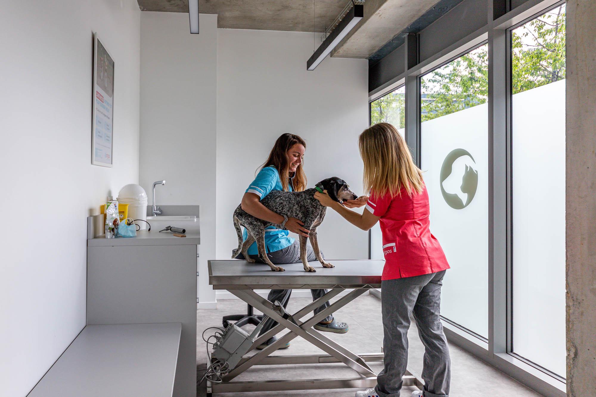 Clinique Vétérinaire Argos Nantes République Nantes
